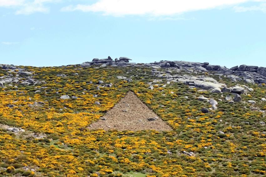 La flor del piorno tiñe Gredos de amarillo
